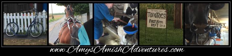 Amy Lillard romance author www.amysamishadventures.com